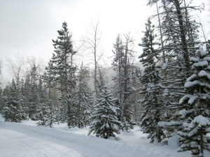 Snowmobile Trail to Ridge Yurt