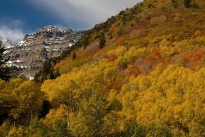 Fall colors cover the slopes around the Aspen Grove Area